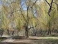 Парк «Нивки» (східна частина) IMG 5202.jpg