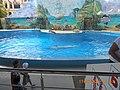 Сочинский дельфинарий парка «Ривьера». 21.jpg