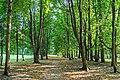 Старые деревья.jpg