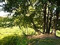 Тарзанка в Никульском - panoramio.jpg