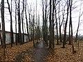 Ясеневая роща, Воронеж.jpg