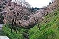 ささやきの小径 2014.4.12 - panoramio.jpg