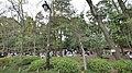 井の頭公園 - panoramio (56).jpg