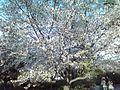 岡崎公園 - panoramio (1).jpg