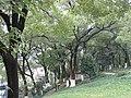 景山风光 - panoramio (1).jpg