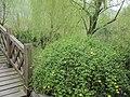 温州乐园-春风又绿小桥畔 - panoramio.jpg