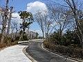 貞園橋 Teien Bridge - panoramio.jpg