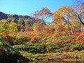 鴨の沼(Lake Kamono) - panoramio.jpg