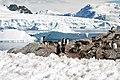00 2114 Antarktis - Cuverville Island.jpg