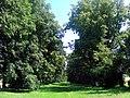 01 Lindenallee Ladendorf.jpg