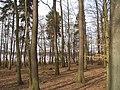 05-04-03-plagefenn-by-RalfR-16.jpg