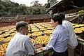 11.10 副總統「金漢柿餅教育農園」 (50585434718).jpg