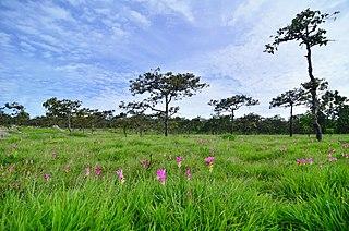 Chaiyaphum Province Province of Thailand