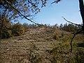 """12-110-0173. """"Могила Товста"""" (головний курган) вид з лісу.JPG"""