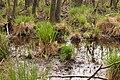15-05-09-Biosphärenreservat-Schorfheide-Chorin-Totalreservat-Plagefenn-DSCF5541-RalfR.jpg