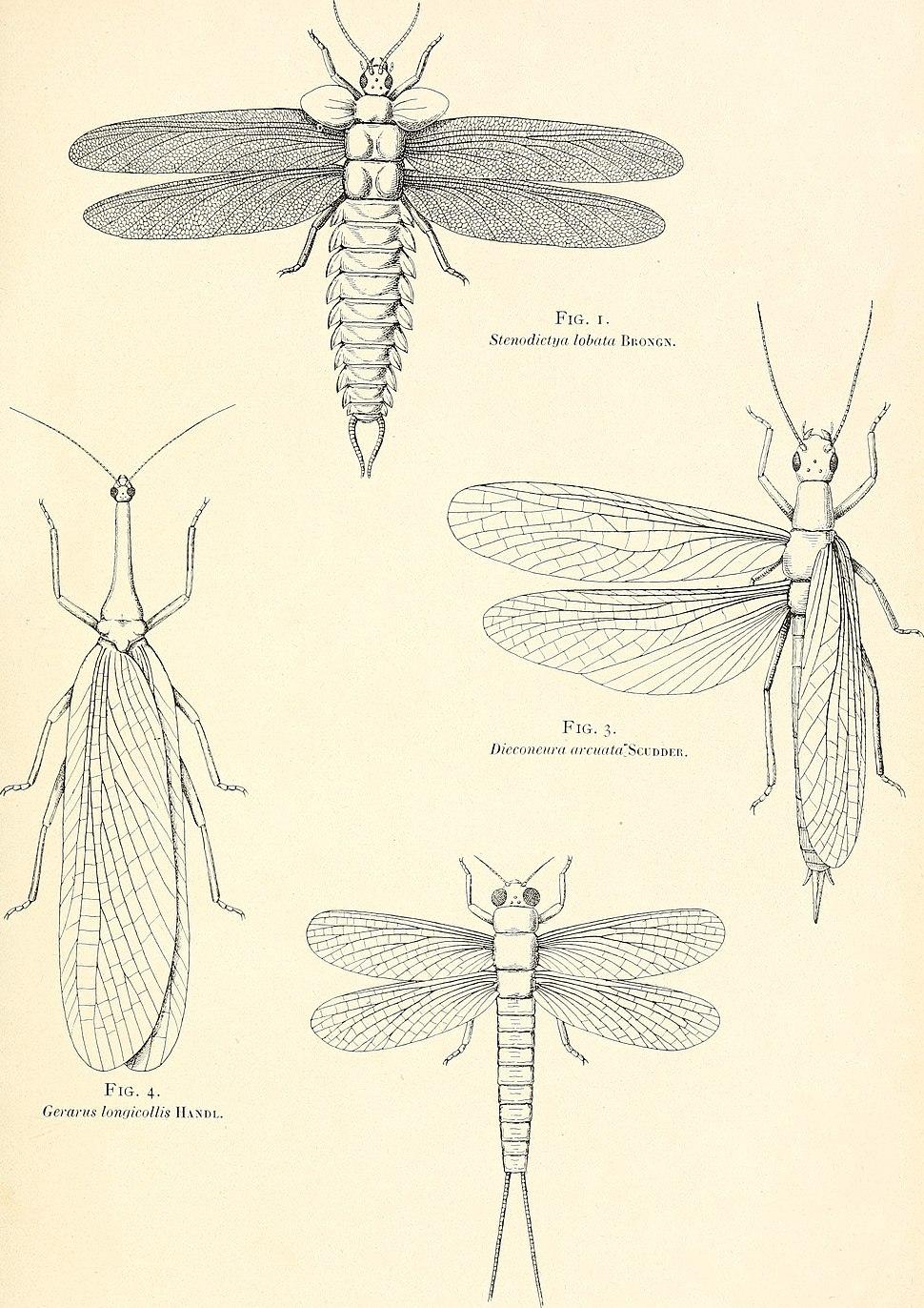 1er Congrès international d'entomologie, Bruxelles, 1-6 août, 1910 (1911-12) (16477916279)