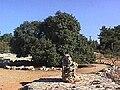 2העץ הבודד.jpg