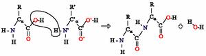 Reacción de condensación