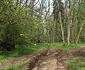 2011 - Track through Asham Wood (geograph 2357700).jpg