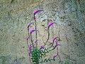 2015-08-31-1067 Hulovlu village, Khachmaz region, Azerbaijan.jpg
