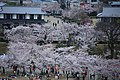 20160403 Himeji-Castle 3362 (26758494221).jpg
