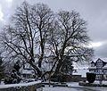2017-01-16 Gerichtslinde Erdmannrode (Hessen) 01.jpg