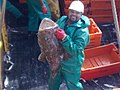 30052015584 aboard trawler African Queen.jpg