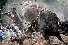 Bull riding - Wikipedia