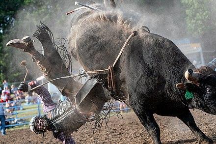 Bareback /& Bronc Riding, Professional Rodeo Chaps PBR//PRCA//IPRA; Bull Riding