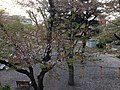 6 Chome Funabashi, Setagaya-ku, Tōkyō-to 156-0055, Japan - panoramio (12).jpg