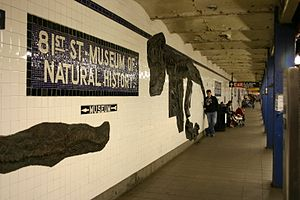 81st Street–Museum of Natural History (IND Eighth Avenue Line) - Dinosaur artwork on one of the station walls