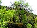 A@a alive forever (St.Cristine Chapel - Agia Paraskevi) Askas - panoramio.jpg