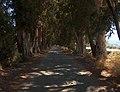 Ağaçlıyol - panoramio.jpg
