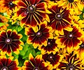 ADD SOME COLOUR TO YOUR LIFE (FLOWERS IN A PUBLIC PARK)-120147 (29273157755).jpg