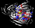 ADP Ribose Diphosphatase (Pocket shown for the substrate).png