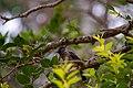 A Bird in Wilpattu National Park 08.jpg