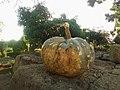 A Pumpkin.jpg