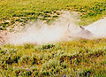 A bison wallow is a shallow depression in the soil.jpg