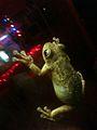 A frog.jpeg