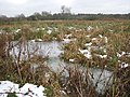 A frozen marsh pasture - geograph.org.uk - 1632590.jpg