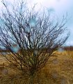 A green tree waiting for a storm - Flickr - odako1.jpg