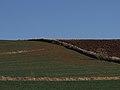 A lo lejos avutardas * La Campiña del Henares (6982787521).jpg