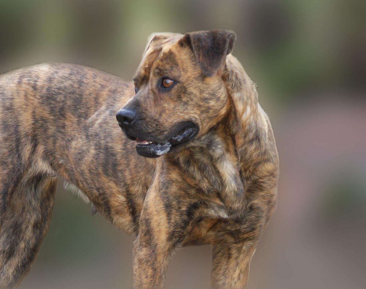 Girl Dog Name For Travelers