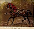 A richly decorated draught-horse standing in front of a carr Wellcome V0021780.jpg