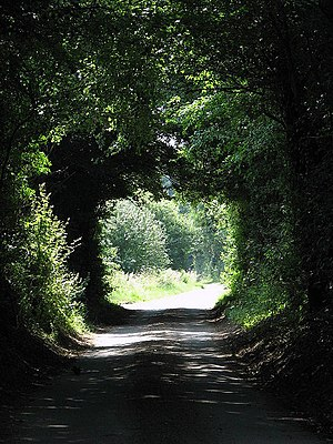 Tree tunnel - Image: A tree tunnel geograph.org.uk 895804