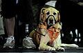 A warrior's best friend 111201-F-WA575-338.jpg
