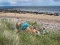 Abandoned lobster pots at Strathsteven - geograph.org.uk - 870833.jpg