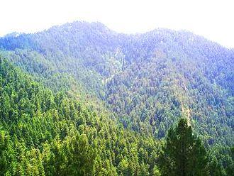 Nathia Gali - Scenic view of Nathia Gali