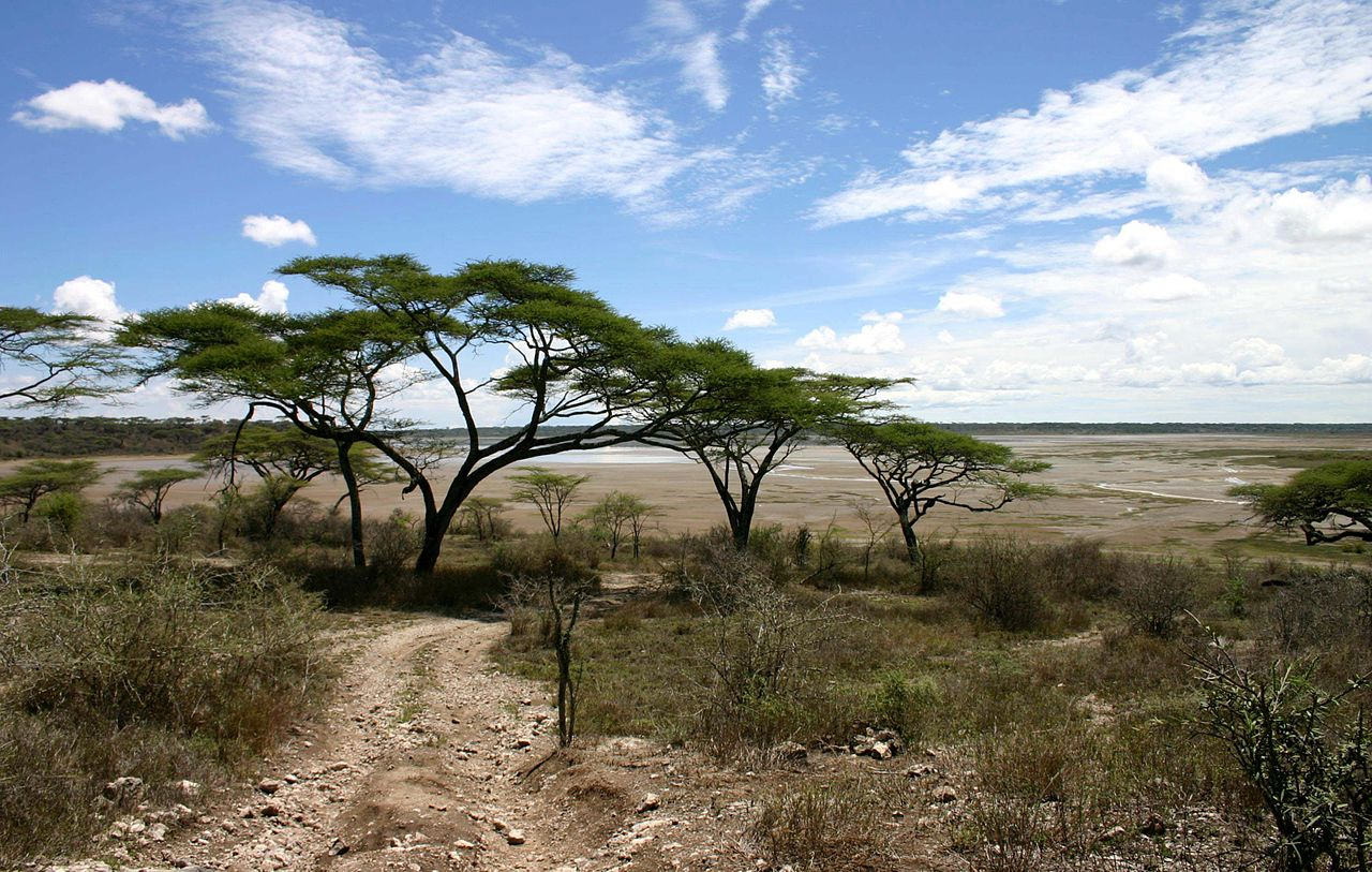 Image Result For Africa The Serengeti