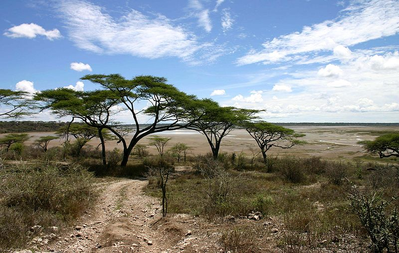 File:Acacia-tree.jpg